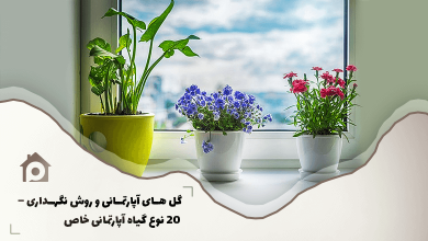Photo of گل های آپارتمانی و روش نگهداری – ۲۰ نوع گیاهان آپارتمانی خاص
